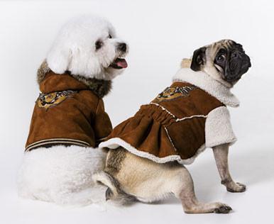 Одежда для собак от Roberto Cavalli