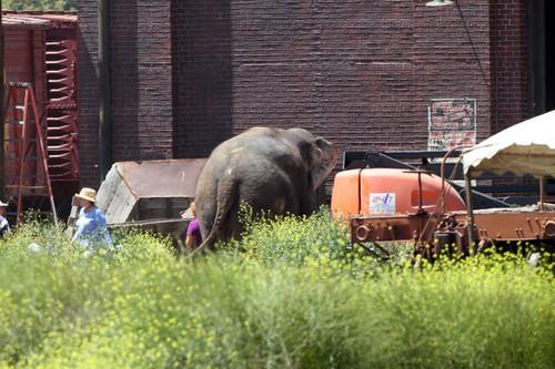 Вода для слонов