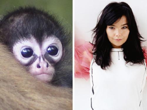 Бьорк и обезьяна