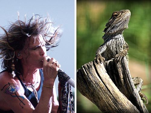 Стивен Тайлер и ящерица