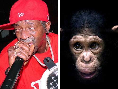 Флава Флав и шимпанзе