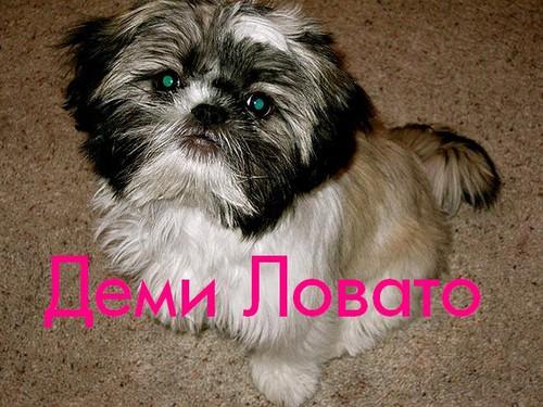 Собака Деми Ловато