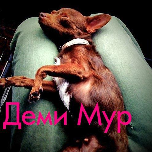Собака Деми Мур