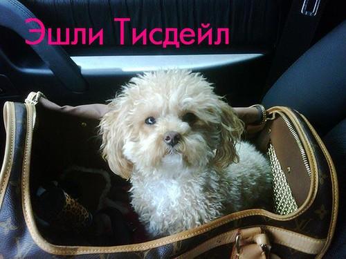 Собака  Эшли Тисдейл
