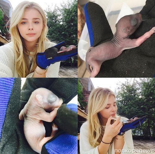 Звезды в социальных сетях: Кендалл Дженнер стала блондинкой, а Линдси Лохан отправилась на свадьбу