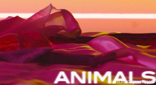 Видео с текстом песни Maroon 5 - Animals