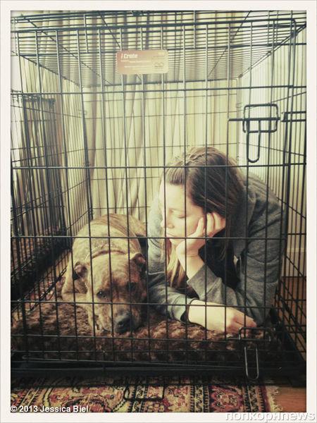 Звезды в Твиттере: Деловая Наталья Водянова и эмоциональная Хейден Панеттьер