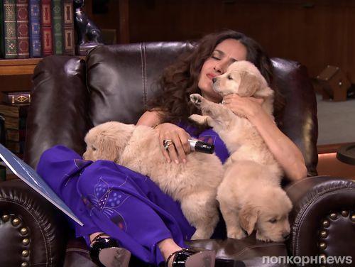Видео: Сальма Хайек сражается за право погладить щеночков