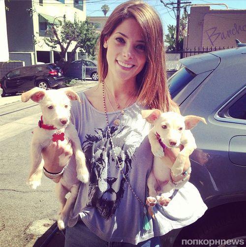 Эшли Грин завела двух щенков