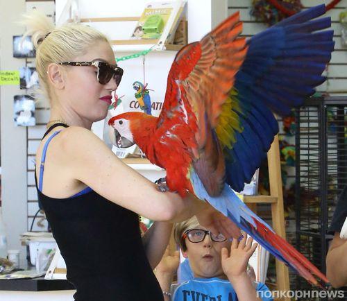 Гвен Стефани купила детям попугая
