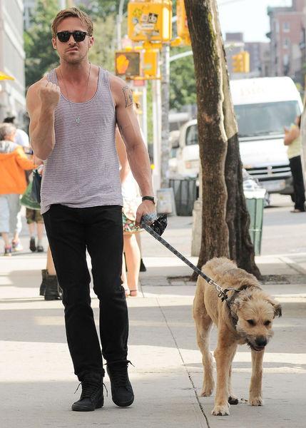 Собаке Райана Гослинга запретили посещать занятия йогой