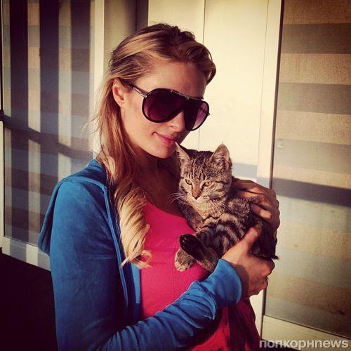 Сестры Хилтон взяли себе котенка Деми Мур