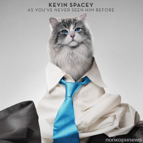 Кевин Спейси перевоплотился в кота: новый трейлер фильма «Девять жизней»