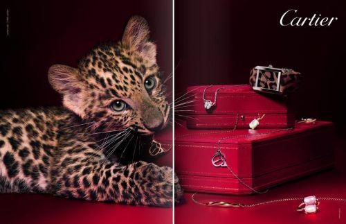 Рекламная кампании ювелирных украшений Cartier
