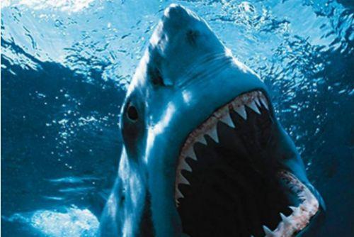 «Ночь акулы» в 3D от создателя «Пункта назначения»