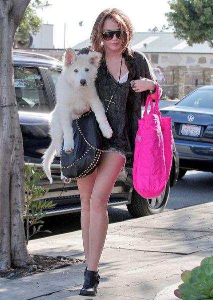 Майли Сайрус в рваной кофте и ее милая собака. 20 февраля