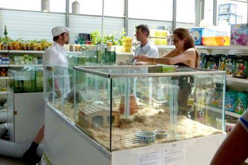 Анджелина Джоли и Брэд Питт в зоомагазине