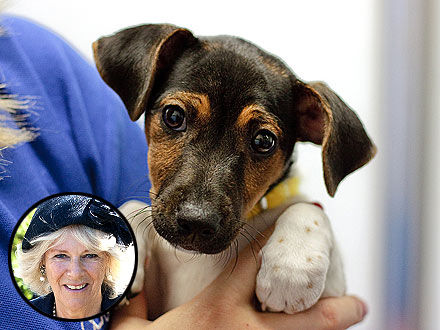 Камилла Паркер Боулз взяла из приюта щенка