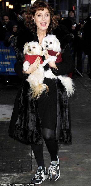 Сьюзан Сэрандон пришла на шоу к Дэвида Леттерману с собаками