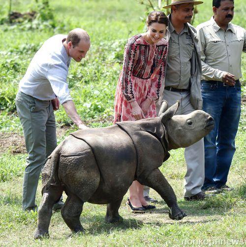 Принц Уильям и Кейт Миддлтон покормили слонов и носорогов в Индии