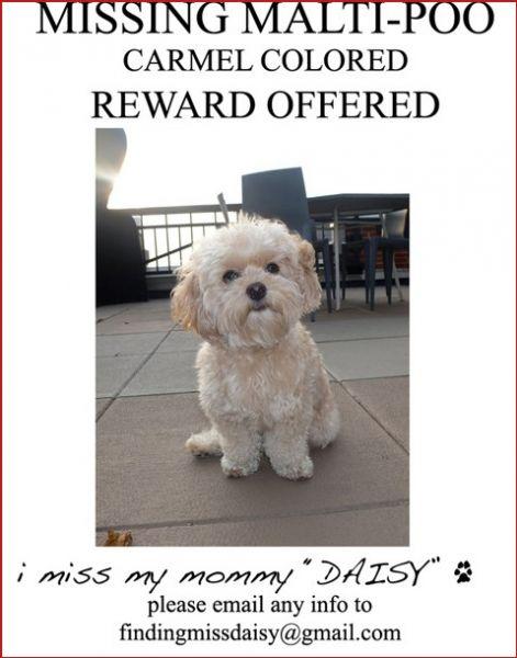 Пропала собака Джессики Симпсон