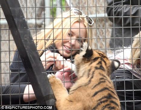 Кайли Миноуг в зоопарке кормит тигренка