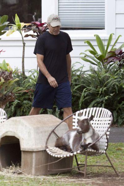 Джордж Клуни продолжает смотреть на коз