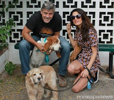 Джордж и Амаль Клуни завели щенка