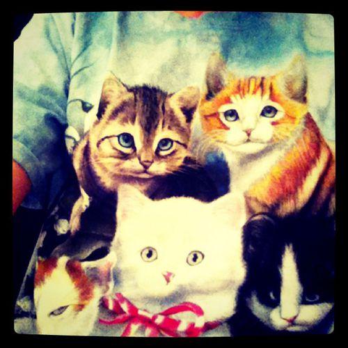 Тэйлор Свифт надела очередную футболку с кошками