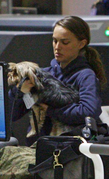 Натали Портман и ее песик в аэропорту