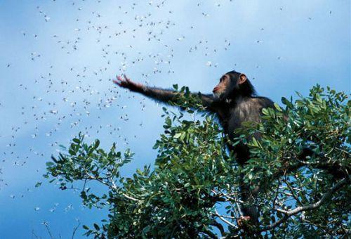Самые лучшие фотографии года журнала National Geographic