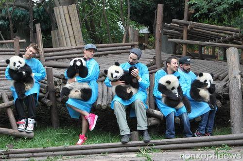 Backstreet Boys покормили маленьких панд