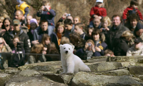 В Берлинском зоопарке умер белый медведь Кнут