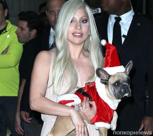Фото: Леди Гага и Тейлор Кинни наряжают своих собак в костюмы Санта Клауса