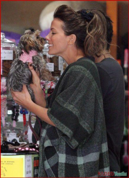 Кейт Бекинсэйл купила новую собаку