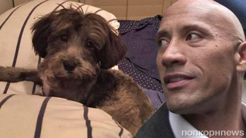 Дуэйн Джонсон пожертвовал 1500 долларов на спасение щенка