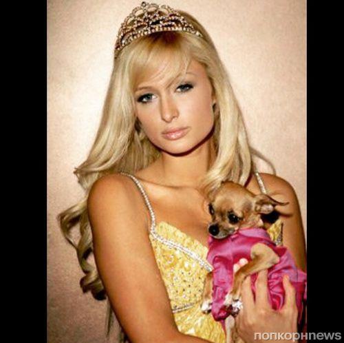 Пэрис Хилтон лишилась любимой собаки