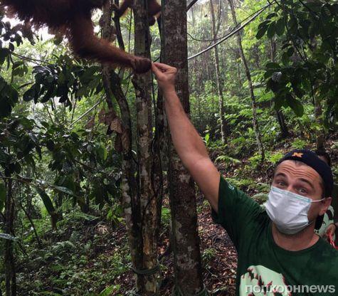 Леонардо ДиКаприо познакомился с дикими обитателями Суматры