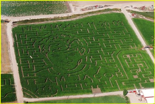 Тэйлор Лотнер и Роберт Паттинсон на кукурузном поле