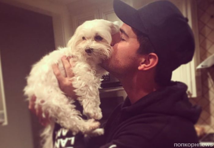 Тейлор Лотнер потерял любимую собаку