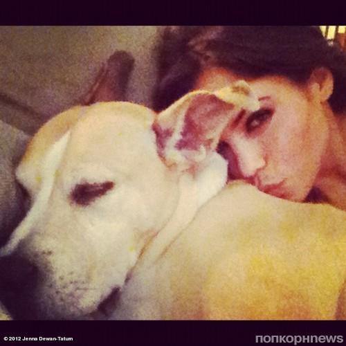 Девка с псом фото 70-568