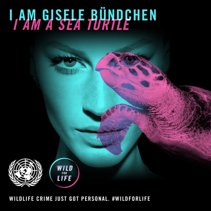 Жизель Бундхен поддержала диких животных в благотворительной акции Wild for Life