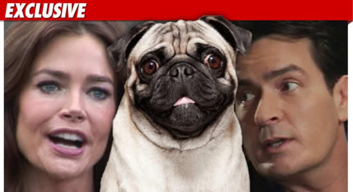 Дениз Ричардс: Чарли Шин издевается над животными