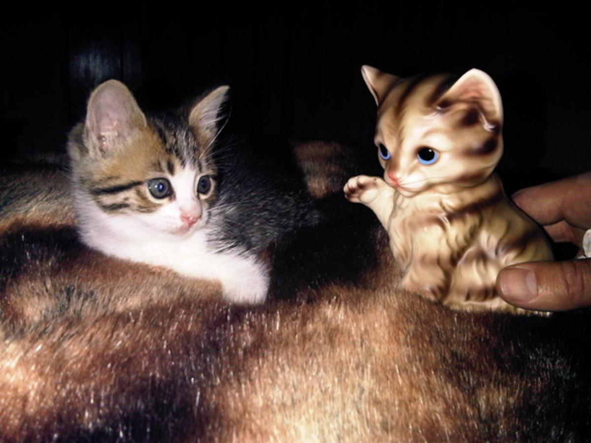 Кэти Перри и Рассел Брэнд завели еще одного котенка
