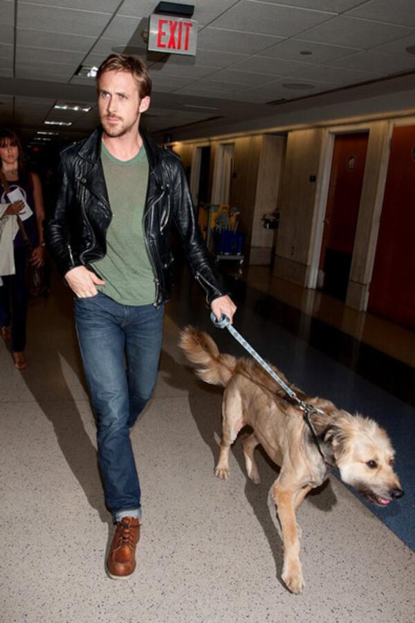 Райан Гослинг и его пес в аэропорту Лос-Анджелеса