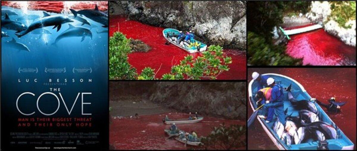"""""""Бухта"""" Смерти: активисты по спасению дельфинов подключили знаменитостей"""