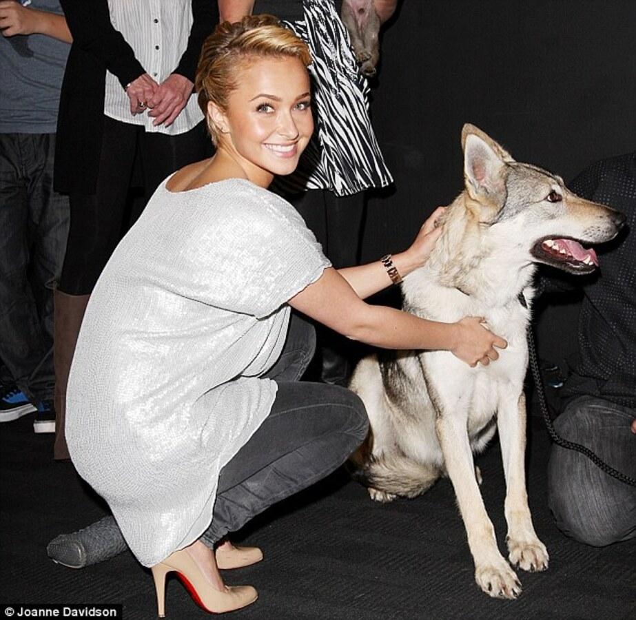 Хайден Панеттьери влюбилась в волчонка
