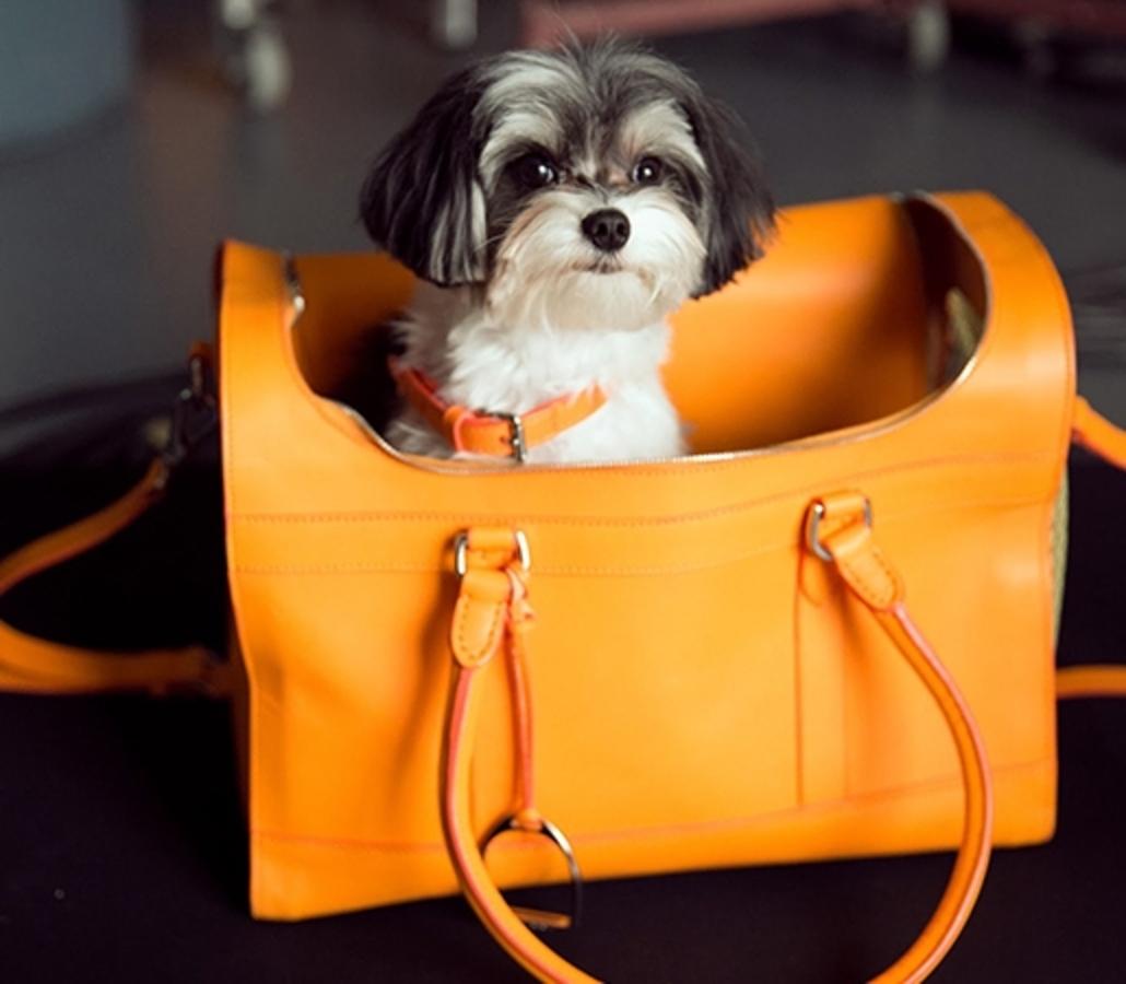 Ральф Лорен представляет новую рекламную кампанию «The Dog Walk»