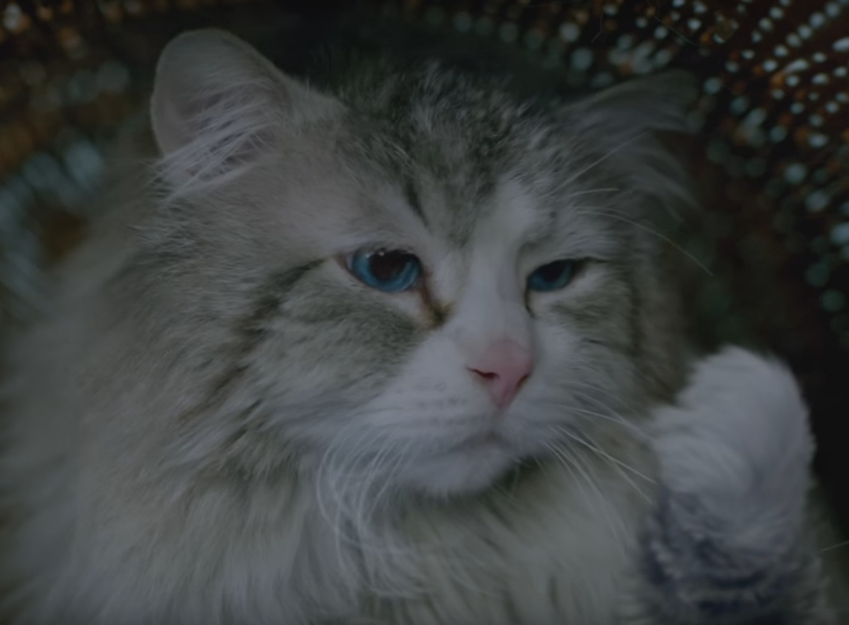 Кевин Спейси превратился в кота: новый трейлер комедии «Девять жизней»