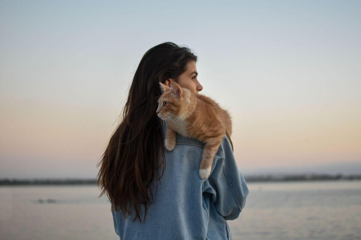 """Опрос от Мамба: что думают мужчины о мифе """"40 кошек""""?"""